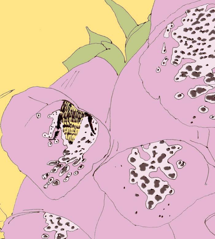 Fingerhutblüten mit einer Hummel. Zeichnung coloriert in rosa, gelb und grün