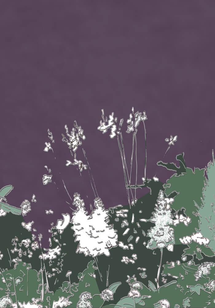 Grafik: Weiße Blüten vor lila Wand