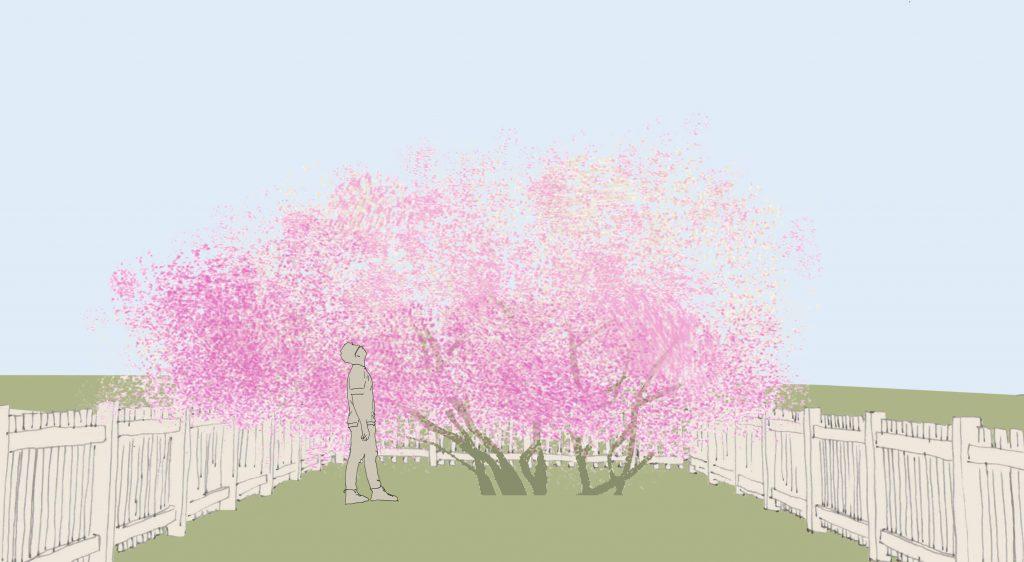 ein blühender Strauch in einem kleinen Garten. Ein Mensch steht bis über den Kopf in der Krone