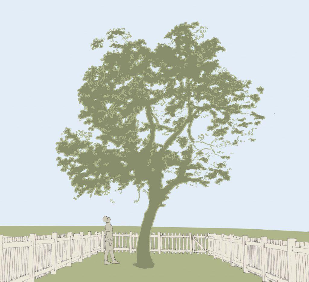 ein großer Baum mit hohem Kronenansatz in einem kleinen Garten. Ein Mensch kuckt verwundert nach oben in die Krone