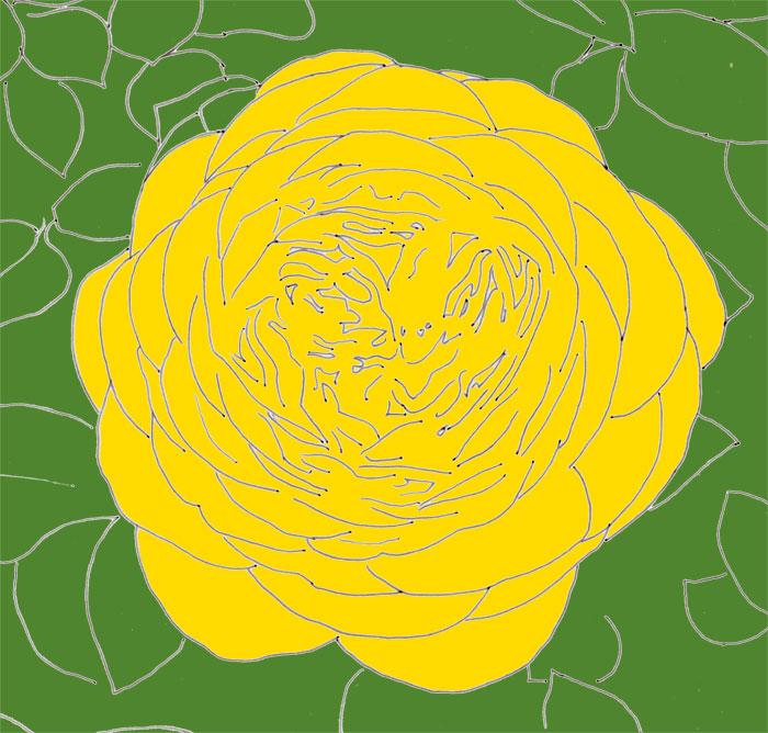 Gefüllte Rosenblüte in gelb, skizziert