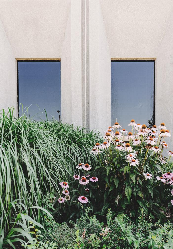 Beet mit Gräser, Bodendeckern und Echinacea