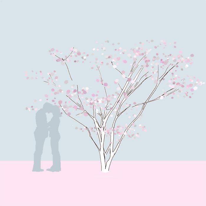 Grafik, Prunus subhirtella 'Accolade'