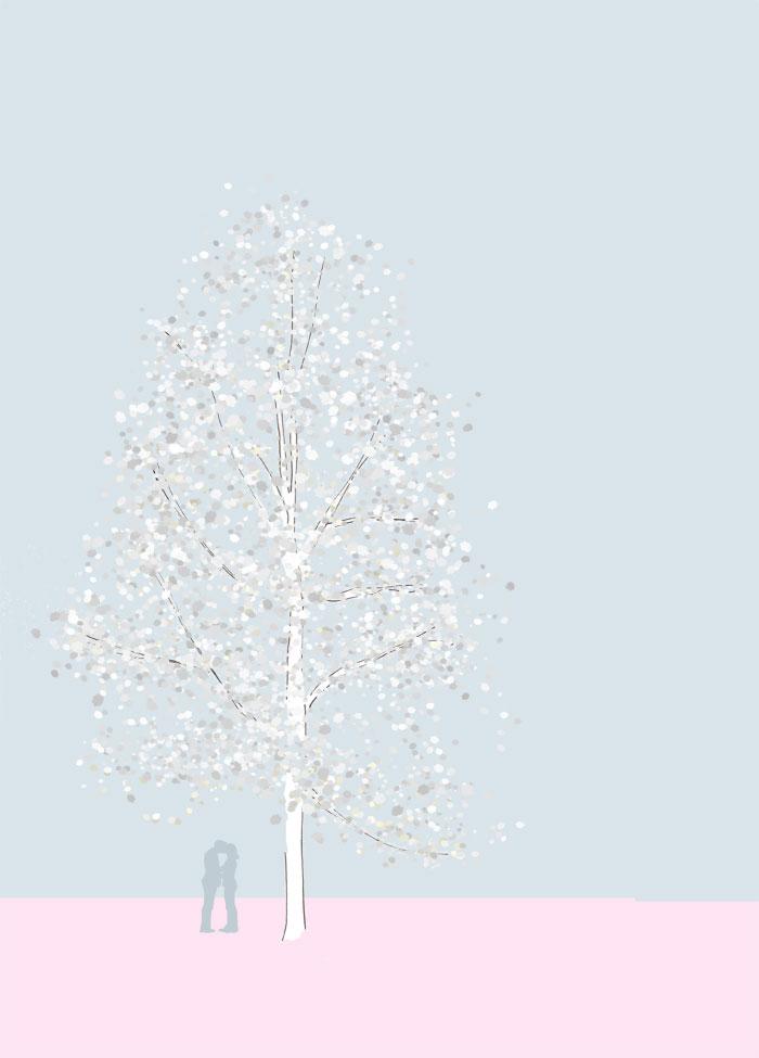 Grafik einer Vogelkirsche, Prunus avium