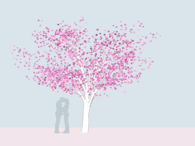 Grafik einer Nelkenkirsche - Prunus serrulata 'Kanzan - als Hochstamm