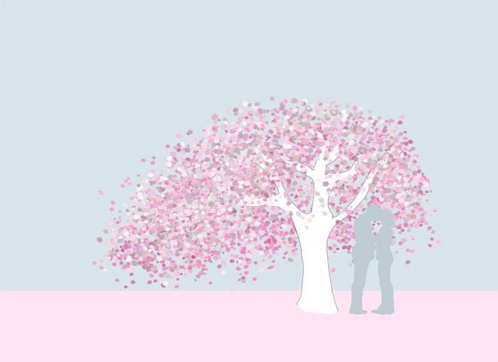 Grafik Hänge-Nelkenkirsche Prunus serrulata 'Kiku-shidare-zakura'
