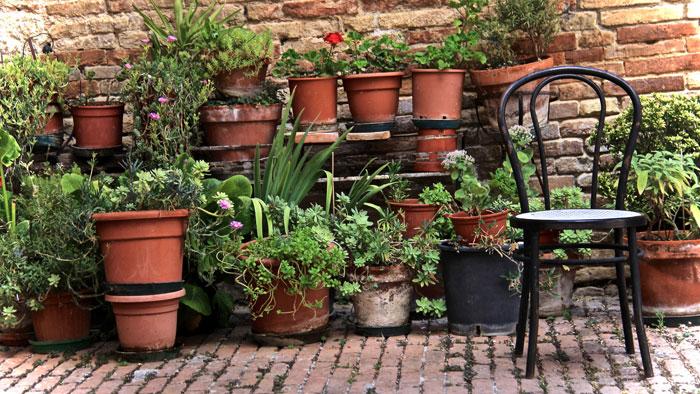 verschiedene bepflanzte Töpfe vor einer Klinkerwand
